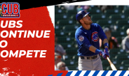 Cubs Continue to Compete